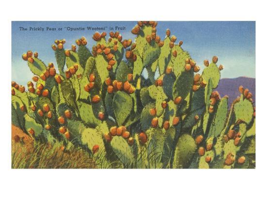 prickly-pear-cactus-in-fruit