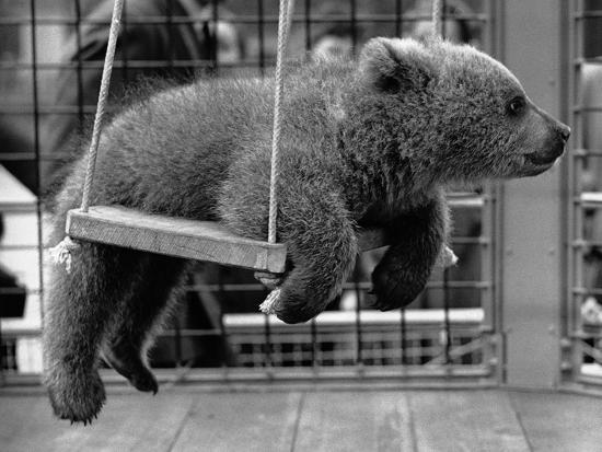princess-anne-s-bear-on-his-swing