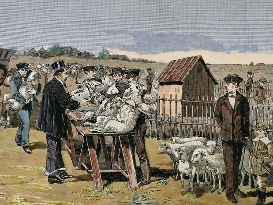 prisma-archivo-french-chemist-and-bacteriologist-vaccination-of-sheep-against-anthrax-agerville-france-1884