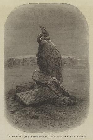 purification-the-griffon-vulture-from-the-bird