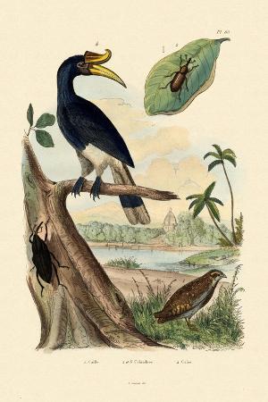 quail-1833-39