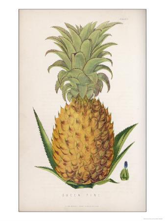 queen-pineapple