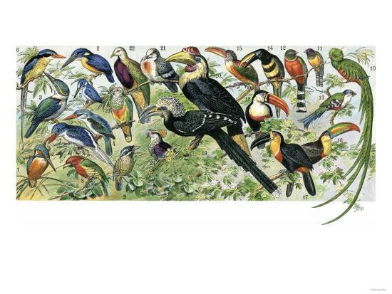 quetzal-toucans-and-other-tropical-birds