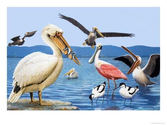 r-b-davis-birds-with-strange-beaks