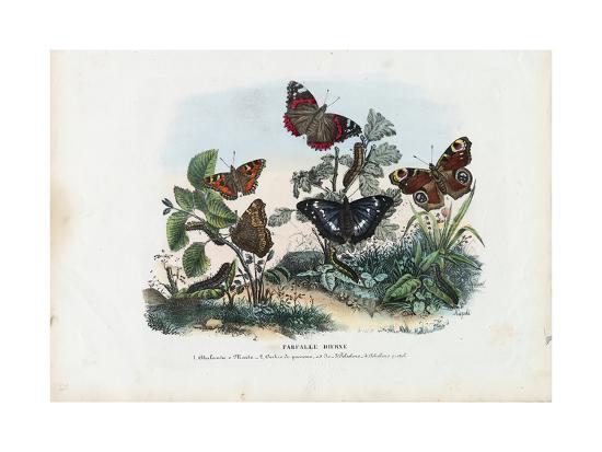 raimundo-petraroja-butterflies-1863-79