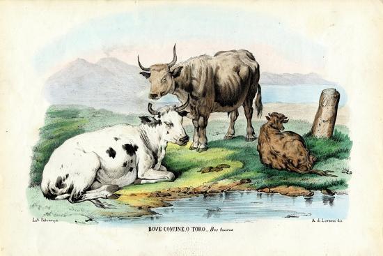 raimundo-petraroja-cattle-1863-79