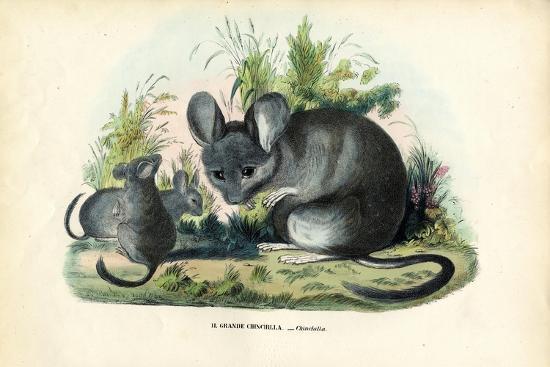 raimundo-petraroja-chinchilla-1863-79