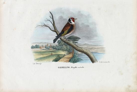 raimundo-petraroja-european-goldfinch-1863-79