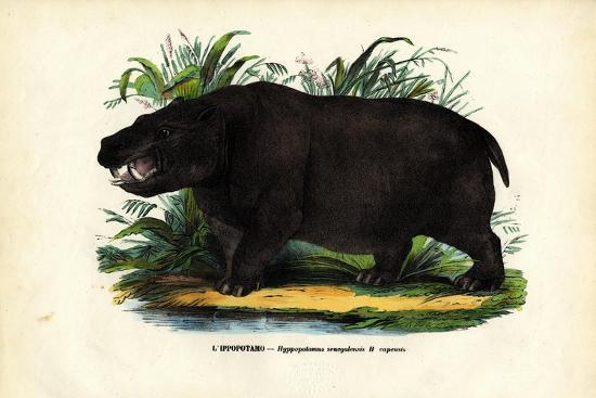 raimundo-petraroja-hippo-1863-79