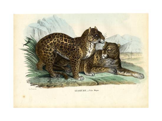 raimundo-petraroja-jaguar-1863-79