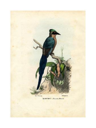 raimundo-petraroja-motmot-1863-79