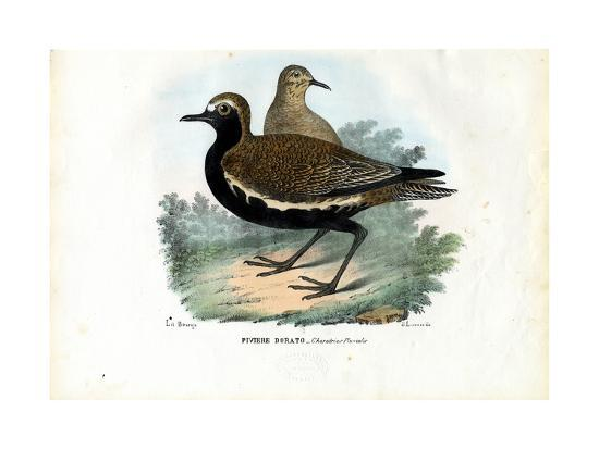raimundo-petraroja-plover-1863-79