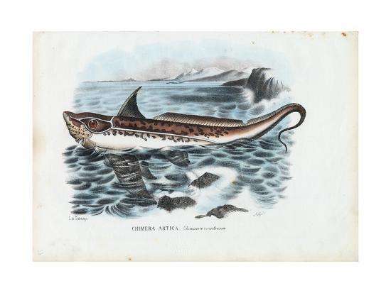 raimundo-petraroja-rabbit-fish-1863-79