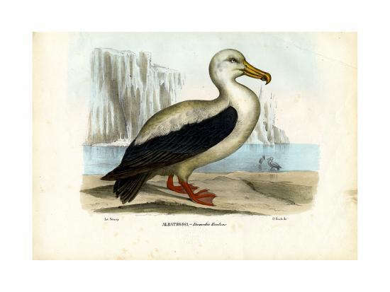 raimundo-petraroja-royal-albatross-1863-79