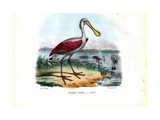 raimundo-petraroja-spoonbill-1863-79