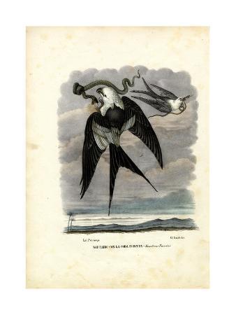 raimundo-petraroja-swallow-tailed-kite-1863-79