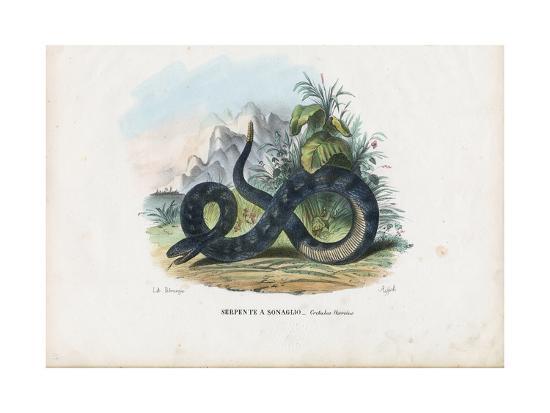 raimundo-petraroja-timber-rattlesnake-1863-79