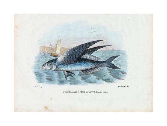 raimundo-petraroja-tropical-two-wing-flyingfish-1863-79