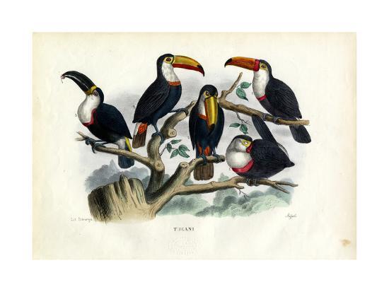 raimundo-petraroja-tucans-1863-79