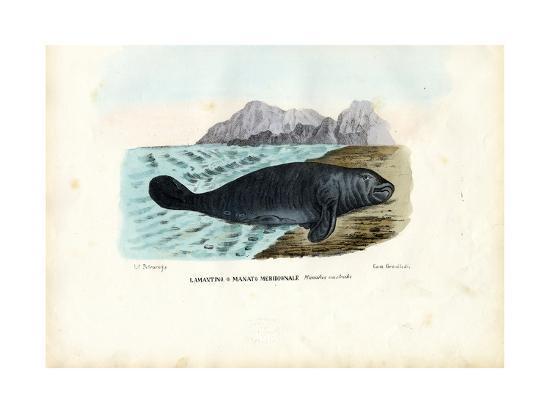 raimundo-petraroja-west-indian-manatee-1863-79