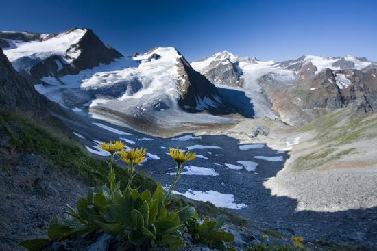 rainer-mirau-austria-tyrol-tztaler-alpen-wildspitze-summit-pippau-crepis