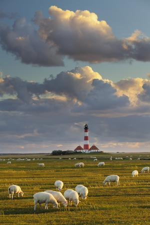 rainer-mirau-sheep-lighthouse-of-westerhever-municipality-schleswig-holstein-germany
