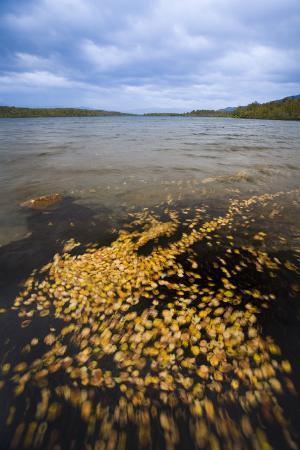 rainer-mirau-sweden-lapland-lake-shore-leaves-landscape-autumn