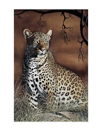 rajendra-singh-sitting-leopard