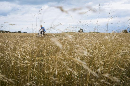 ralf-gerard-boy-with-bicycle-in-grain-field