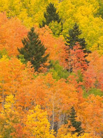 ralph-lee-hopkins-leaves-of-a-forest-change-colors-in-autumn-santa-fe-new-mexico-usa