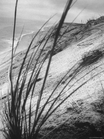 ralph-morse-dunes-in-the-cape-cod-national-park