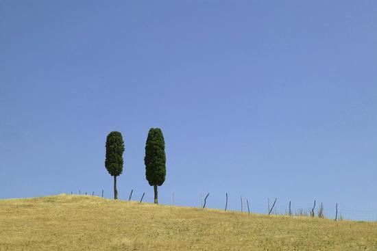 ralph-richter-two-trees-against-a-blue-sky-tuscany