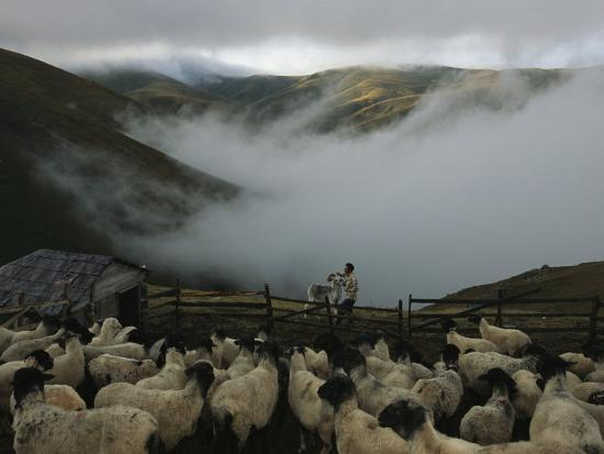 randy-olson-a-shepherd-tends-his-flock-in-the-mountain-summer-pastures