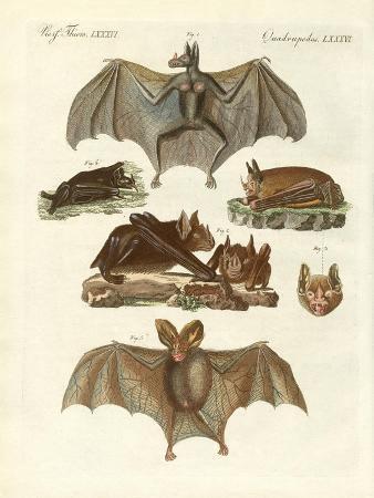 rare-bats