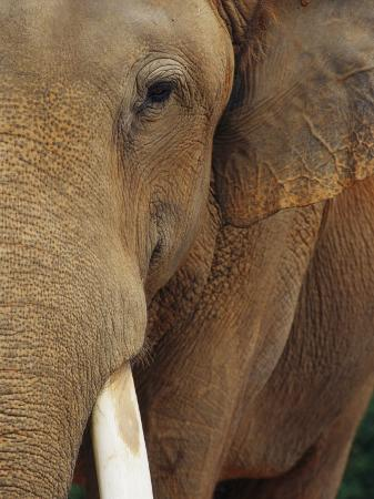 raul-touzon-a-close-view-of-the-face-of-an-elephant