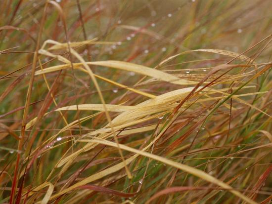 raymond-gehman-a-close-view-of-raindrops-on-the-meadow-grass