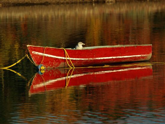 raymond-gehman-a-gull-rests-on-an-old-rowboat