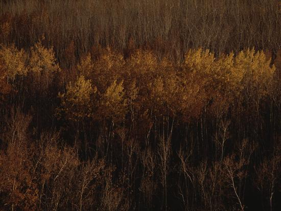 raymond-gehman-an-aerial-view-of-a-stand-of-trees-in-autumn-colors