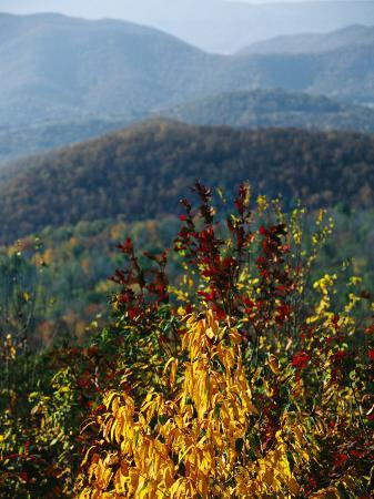 raymond-gehman-autumn-colored-cherry-tree-with-view-of-blue-ridge-mountains