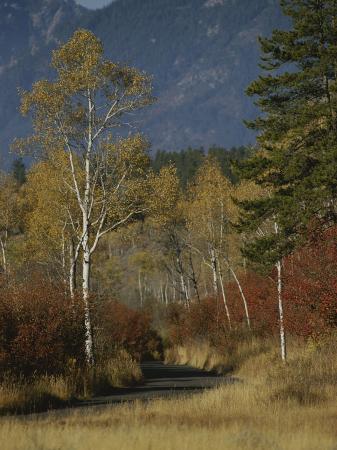 raymond-gehman-autumn-foliage-targhee-national-forest-palisades-idaho
