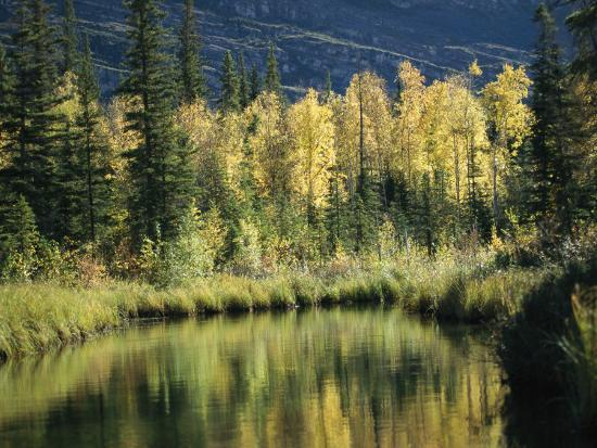 raymond-gehman-birch-and-spruce-trees-are-reflected-in-cli-lake