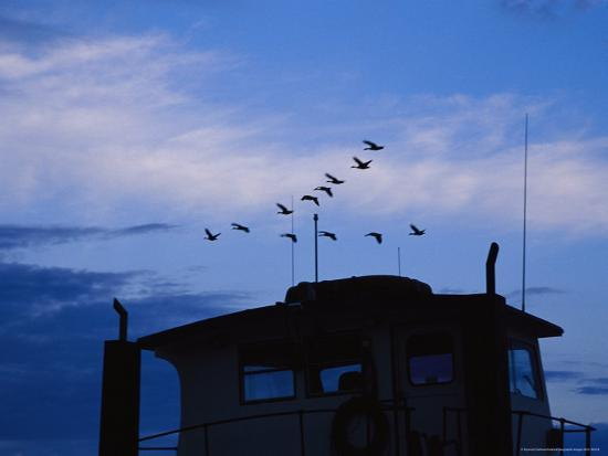 raymond-gehman-canada-geese-flying-high-over-a-boat-at-twilight