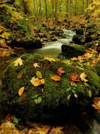 raymond-gehman-fallen-leaves-on-rocks-next-to-a-mountain-stream