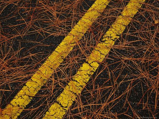 raymond-gehman-long-leaf-pine-needles-littering-a-park-road