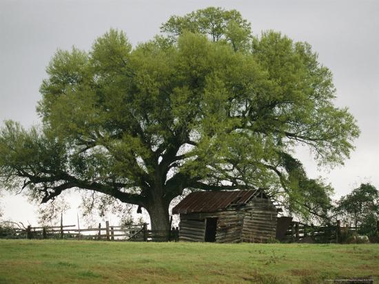 raymond-gehman-old-log-cabin-under-a-large-tree