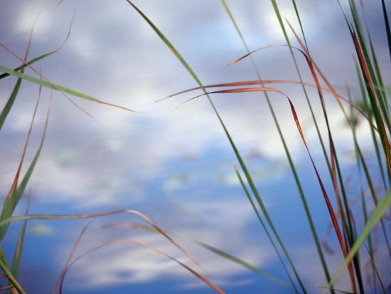 raymond-gehman-sedges-and-sky