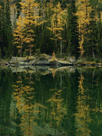 raymond-gehman-subalpine-larches-displaying-fall-colors-are-reflected-in-mary-lake