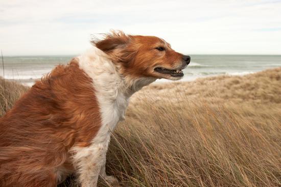 red-dog-on-a-windy-hillside