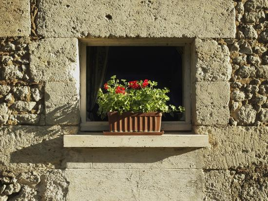 red-geraniums-on-a-window-sill