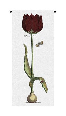 red-tulipa-duris